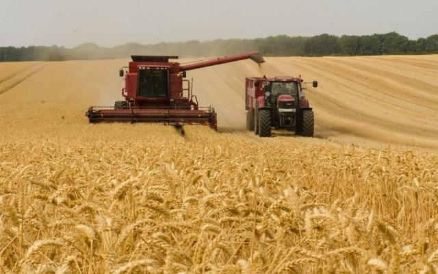 Зърнен Пазар и Движение на Зърното в Страната